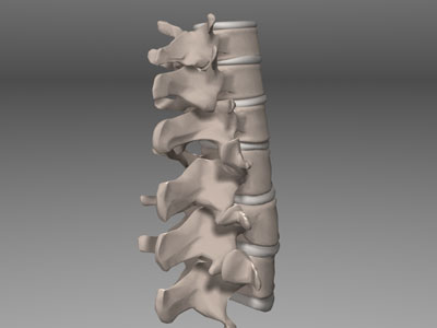 3D Model of the spine